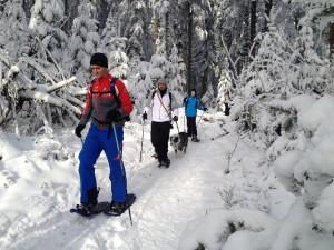 Schwarzwald, Schneeschuhe, Schnee, Winter, Team