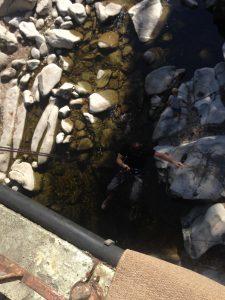 Seil, Wasser, Schwarzwald, Cannyoning